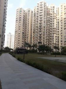 Gallery Cover Image of 1045 Sq.ft 2 BHK Apartment for rent in Sector 137 for 20000