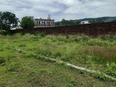1125 Sq.ft Residential Plot for Sale in Harrawala, Dehradun