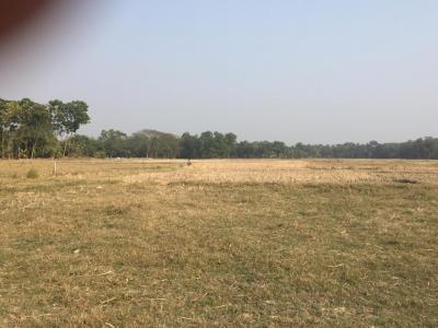 Gallery Cover Image of  Sq.ft Residential Plot for buy in Thakurpukur for 518000