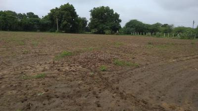 Gallery Cover Image of  Sq.ft Residential Plot for buy in Chharodi for 11000000