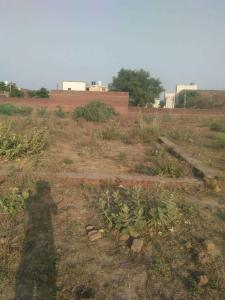 Gallery Cover Image of  Sq.ft Residential Plot for buy in Kehari for 3000000