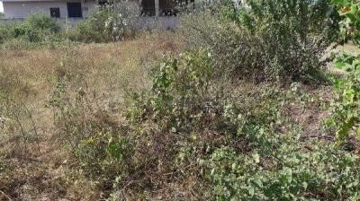 Gallery Cover Image of 3211 Sq.ft Residential Plot for buy in Peerzadiguda for 6200000