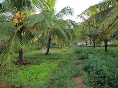 Gallery Cover Image of  Sq.ft Residential Plot for buy in Annur for 5000000