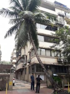 Gallery Cover Image of 1400 Sq.ft 3 BHK Apartment for rent in Churchgate for 160000