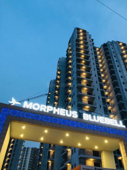 मॉर्फियस ब्लूबेल के गैलरी कवर की तस्वीर