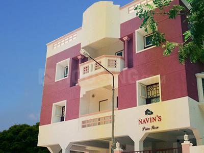 Navin's Primrose