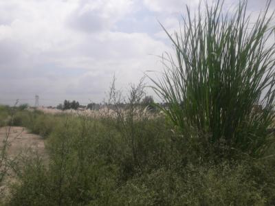 Vardah Aashiyana Enclave