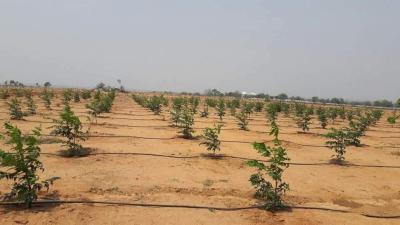 Aadhira Nature Farms