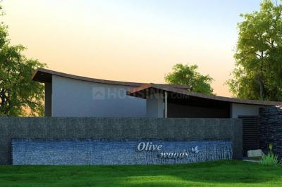 Olive Woods
