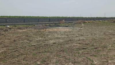 Residential Lands for Sale in Dholera Global City