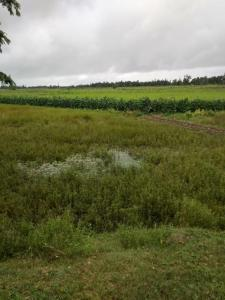 Residential Lands for Sale in Swapna Neer