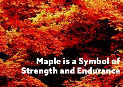 Durga Maple  Brochure 3