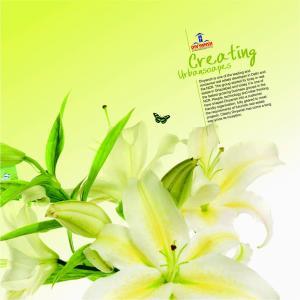 Divyansh Flora Brochure 3