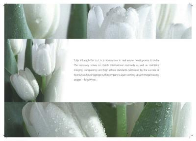 Tulip White Brochure 2